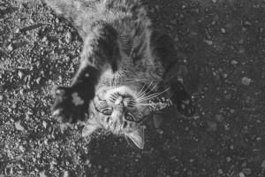 animal-cat-falling-4067-825x550